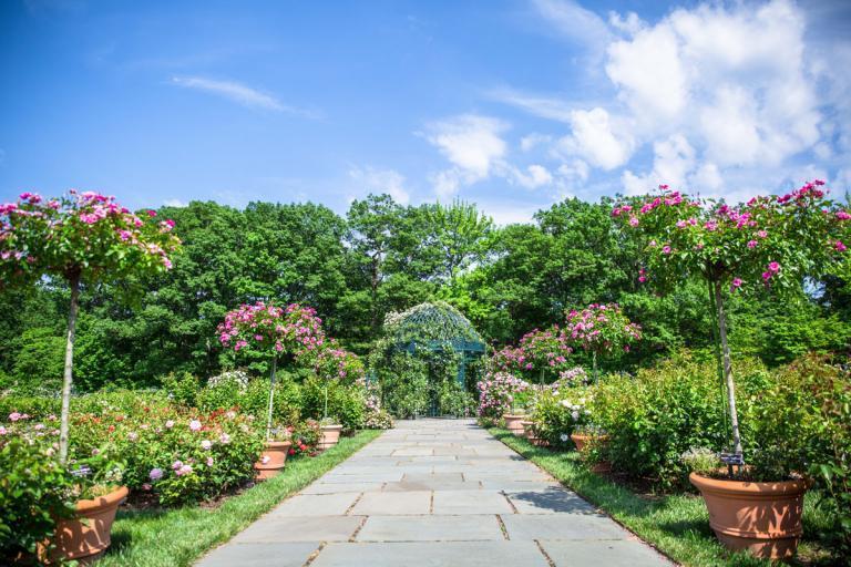 Enjoy Blues Brews At Botany At The New York Botanical Garden Swirled