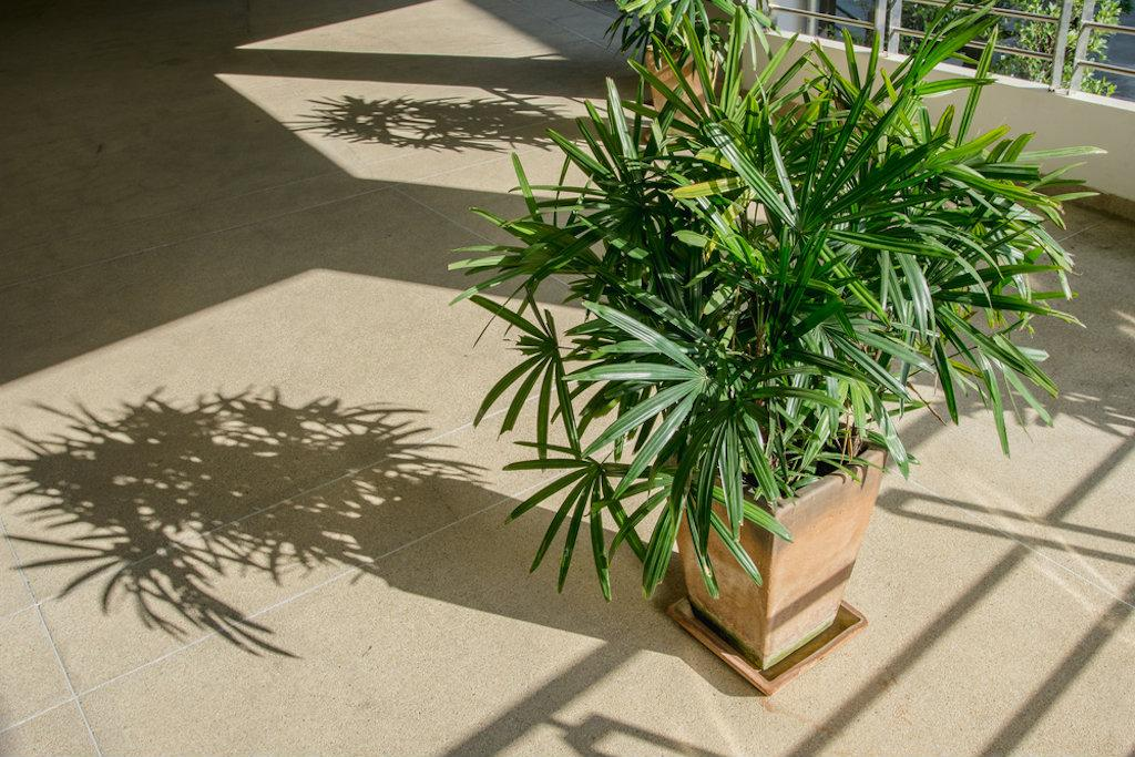 Air-Filtering Plants Are The Home Decor Secret We All Need