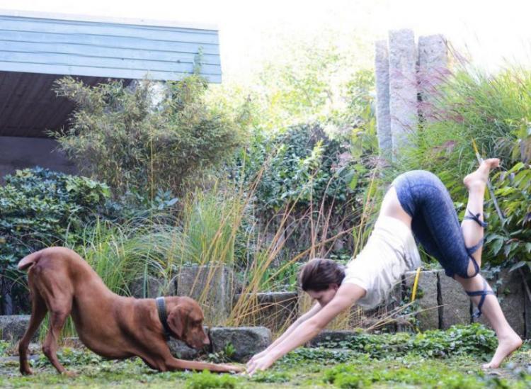 14 Photos That Prove Animals Are The Perfect Yoga Companion