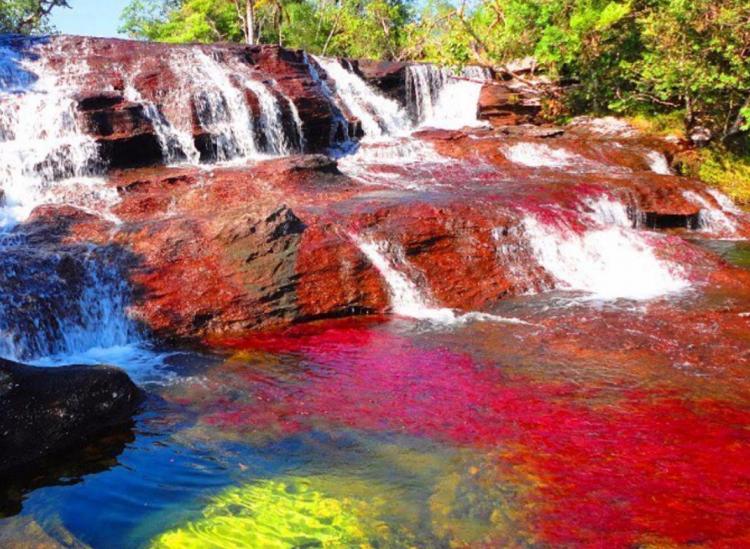 Картинки по запросу cano cristales rainbow river