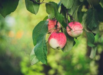 Here's Your Guide To Cooking With Apples