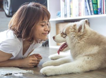 Science Says Office Dogs Could Make Your Life Better