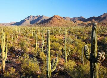 People Keep Stealing Cacti From Saguaro National Park — So They're Getting Microchipped