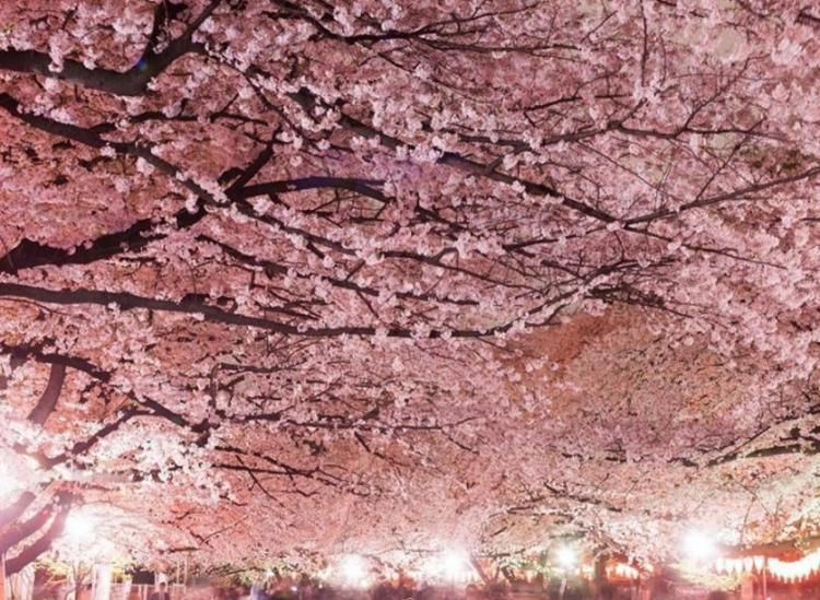 best spring flower festivals