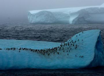 Scientists Just Discovered 1.5 Million Penguins Living In Antarctica's Danger Islands