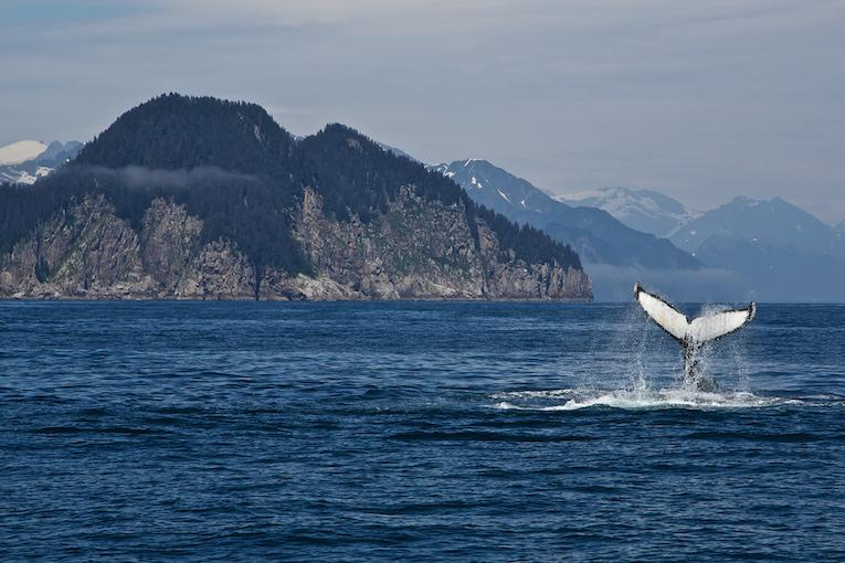 where to see whales