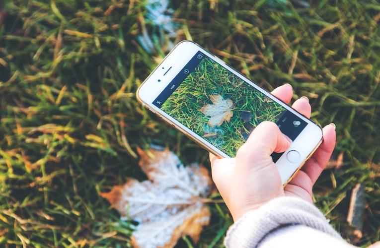 iNaturalist Seek app