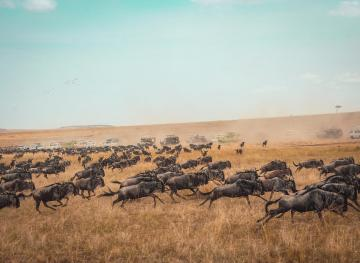 Where To See Awe-Inspiring Animal Migrations Around The World