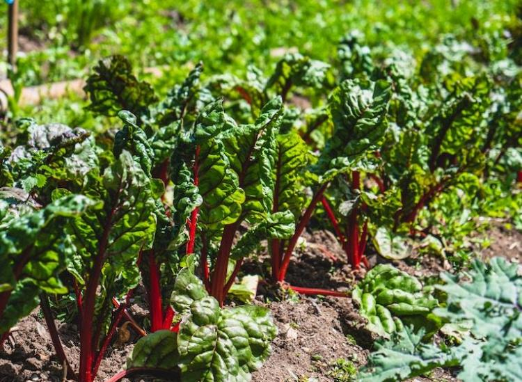best salad greens