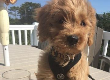 Announcing Friday Fluff, A Newsletter Featuring The Cutest Dogs Of The Week!