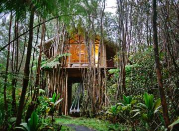 This Treehouse Airbnb Nestled In Hawaii's Rainforest Is All Yours For $50 A Night