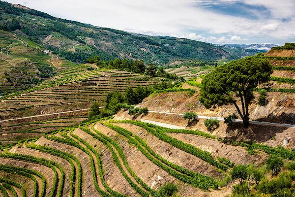 the ultimate wine vacay you need