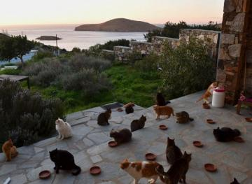 rescue cat job greece