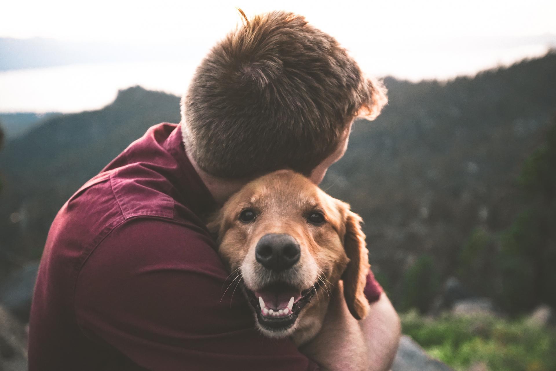 dog emotional health survey
