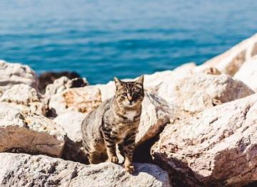 get paid to cuddle cats in greece