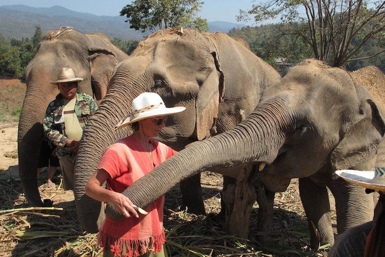 thailand best elephant sanctuary