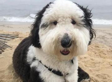Friday Fluff 9/7: The Cutest Dogs Of The Week