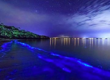 Puerto Rico's Bioluminescent Bay Is One Of The Brightest In The World