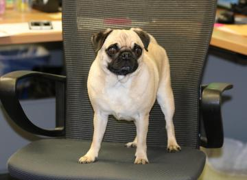 The Real Effect Dog-Friendly Offices Have On Productivity