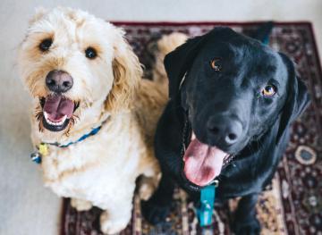 easily trained dog breeds