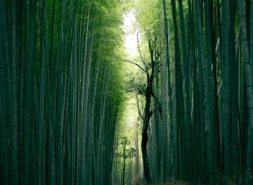 Japan's Most Colorful Places Go Far Beyond Tokyo