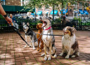 Join The World's Largest Pet Walk And Get Moving With Your Pup