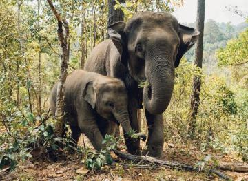 Here's Where To Find The Best Elephant Sanctuaries In Thailand