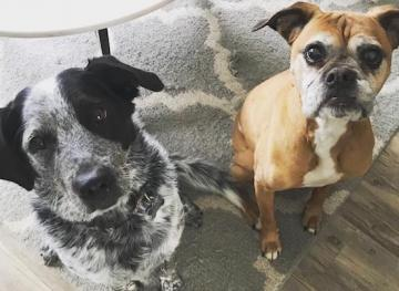 Friday Fluff 10/26: The Cutest Dogs Of The Week, The Best Friends Edition