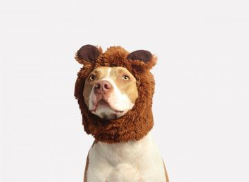 8 Of The Cutest DIY Dog Halloween Costumes