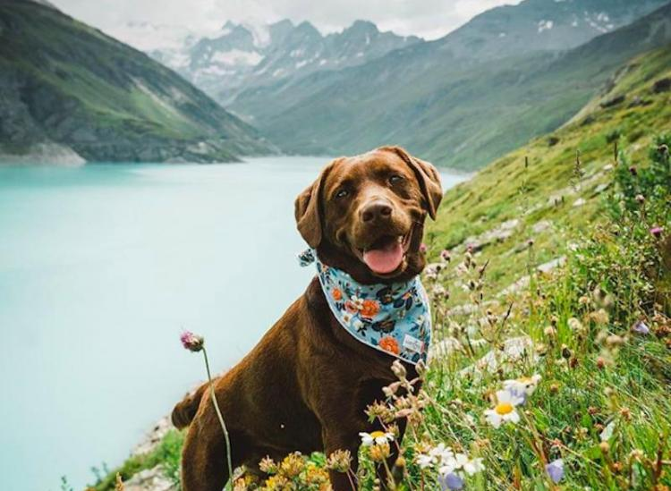 best travel dogs on instagram