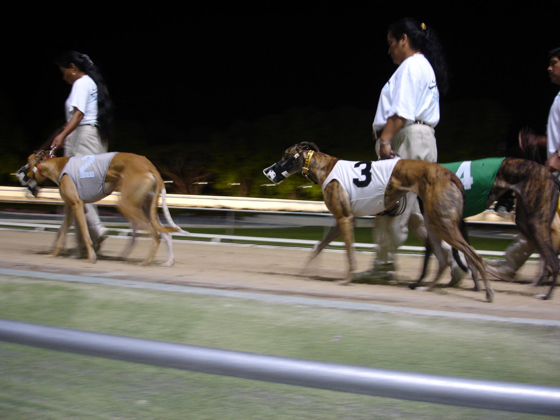 Florida greyhound race ban 2018