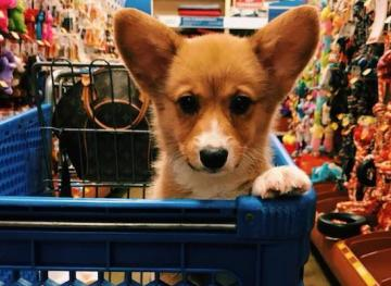 Friday Fluff 11/30: The Cutest Dogs Of The Week