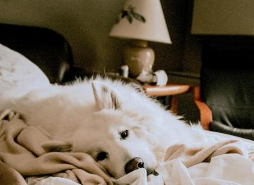 Gals, If You Want To Get The Best Sleep Ever, Snuggle Up With Your Pup
