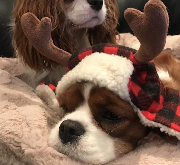 Friday Fluff 12/25: The Cutest Dogs Of The Week, The Christmas Edition