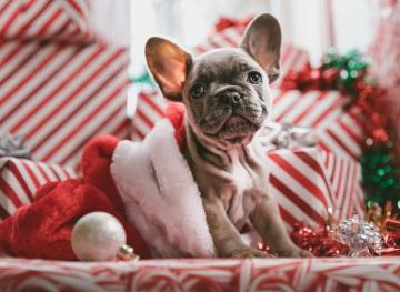 8 Gifts For Your Pups That Are Under $10 And Perfect For Their Stocking