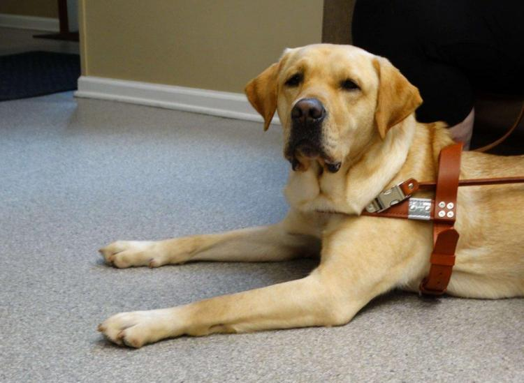 how guide dogs are trained