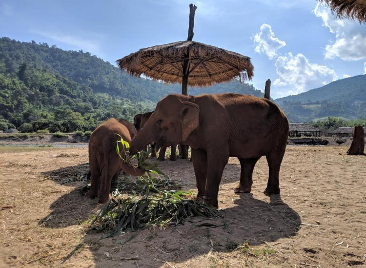 elephant sanctuary ethical