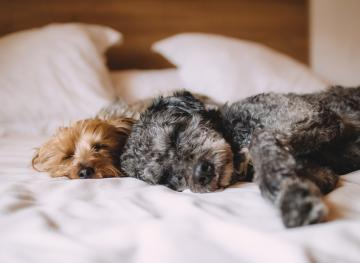 7 Of The Best Dog-Friendly Hotels In The United States
