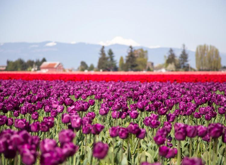 4 Spring Festivals To Wish Away The Winter Blues