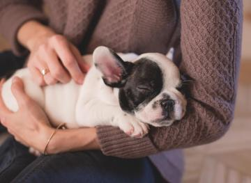 What You Need To Know About Pet Insurance