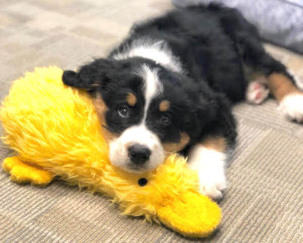 Friday Fluff 04/26: The Cutest Dogs Of The Week
