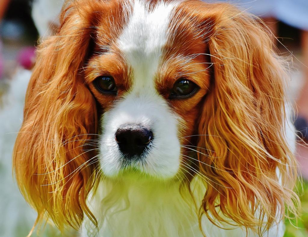 best dog breeds for cities