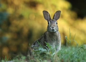 04/21/19 Newsletter: Happy Easter
