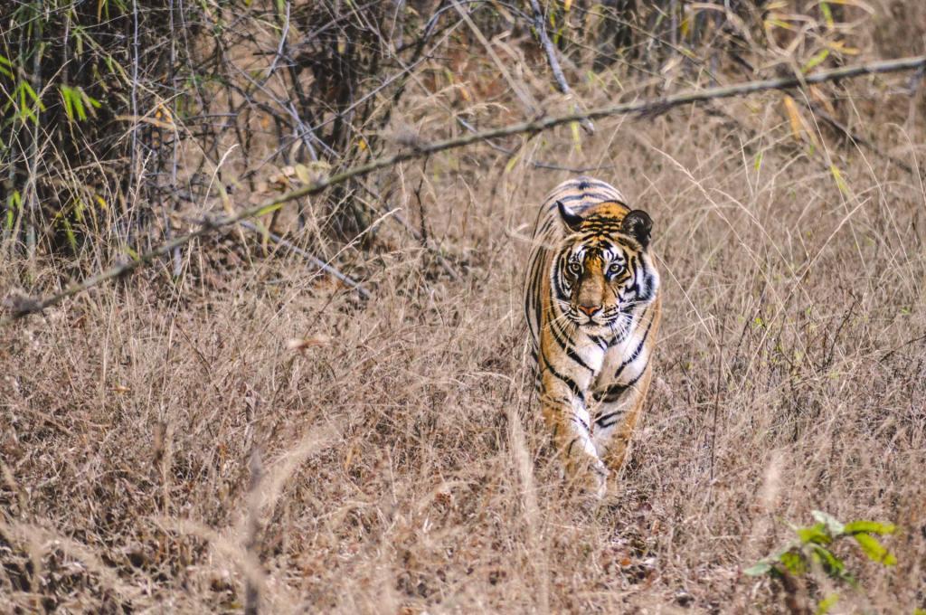where to see wild animals