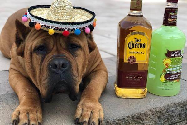 Friday Fluff 05/03: These Pups Are Ready To Pawty